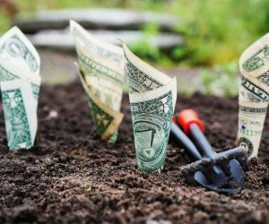 Contributing to an IRA is like planting a money tree